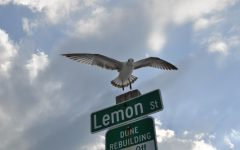 Photo of a seagull landing on a street sign.  One of Schwartz's first photos, and currently his favorite.  Completely unedited.