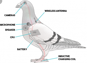 A diagram of the inside of a government surveillance drone.