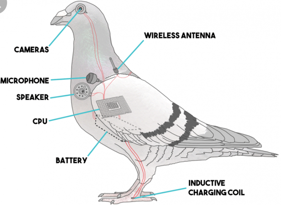 A+diagram+of+the+inside+of+a+government+surveillance+drone.